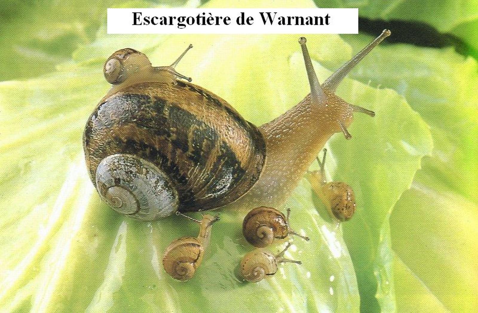 L'ecargotière