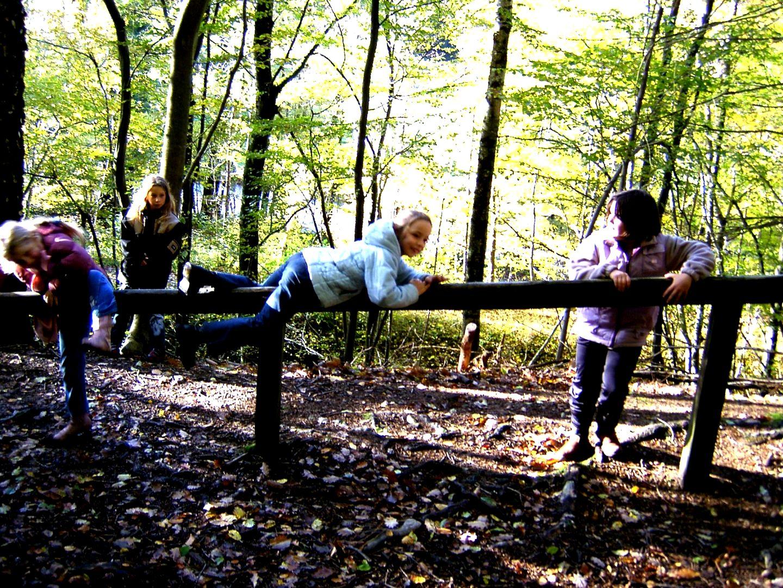 Parcours vita en forêt