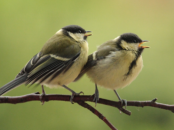 Découverte du monde des oiseaux