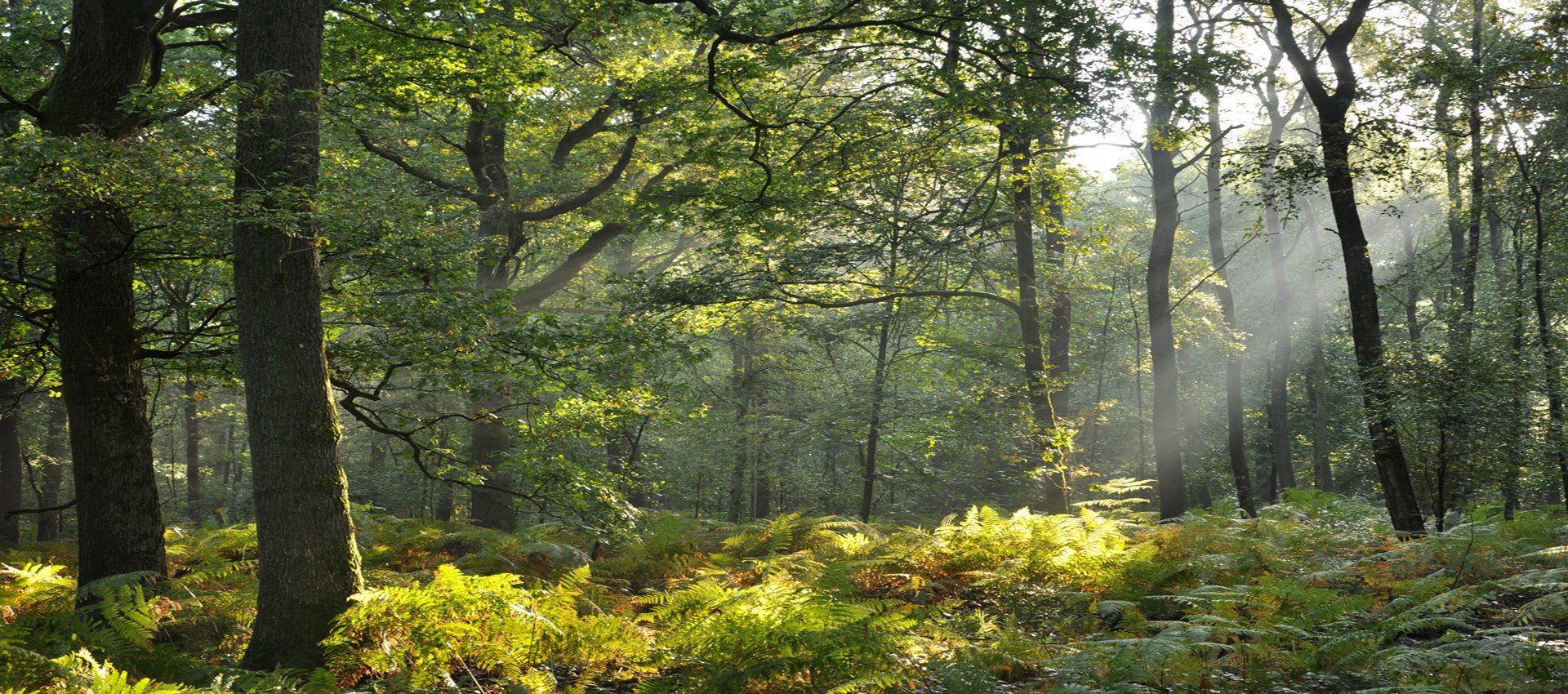 Etude des arbres de nos forêts