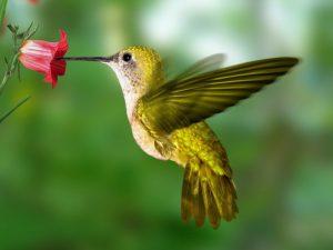 découvrons le monde des oiseaux