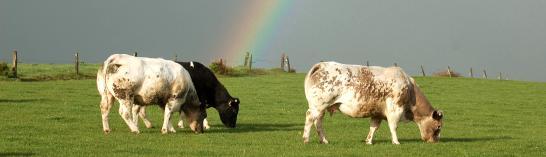 Journée didactique à la ferme