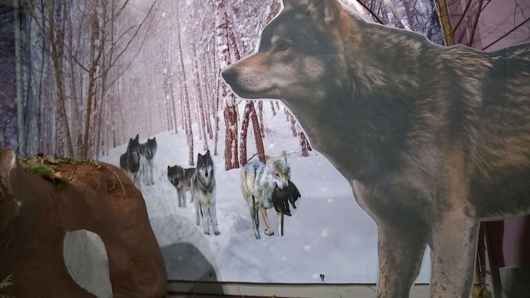 Exposition sur le loup