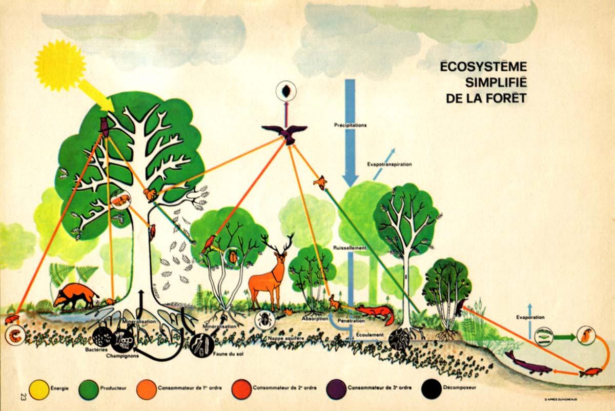 Ecosystème de la forêt